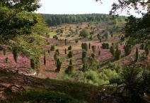 Totengrund, typische Landschaft der Lüneburger Heide
