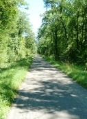 Waldweg nach Blodelsheim