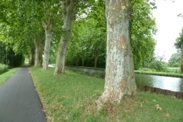 Radweg am ʺCanal du Rhône au Rhinʺ