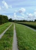 Rheinradweg bei Hügelsheim