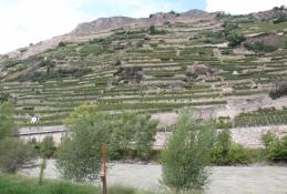 Weinbau am rechten Rhone-Ufer