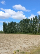 Windschutz für die Felder