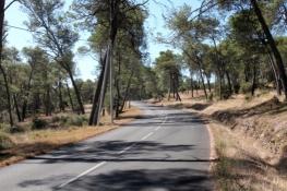 Waldstück auf dem Weg nach Saint-Michel-de-Frigolet