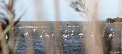 ... und unsere ersten Flamingos