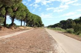 Rhône-Radweg nordöstlich von Aigues-Mortes