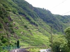 Steile Weinlagen bei Winningen