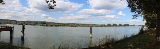 Rhein bei Budenheim