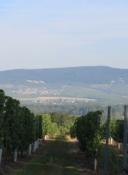 Blick aus den Weinbergen Richtung Rhein
