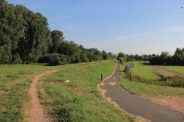 Rheinradweg bei Ingelheim-Nord