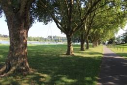 Rhein bei Neuwied