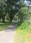 Rheinradweg vor Bonn
