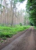 Waldpassage bei Radis