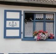 Katzenleben in Nienburg