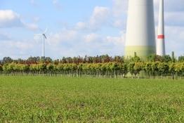 Windpark bei Aschersleben