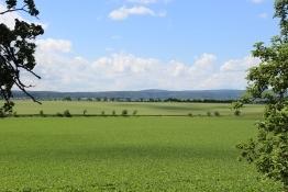 Zwischen Ballenstedt und Quedlinburg