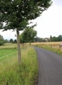 Werra-Radweg bei Jestädt