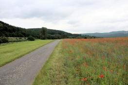 Werra-Radweg vor Kleinvach