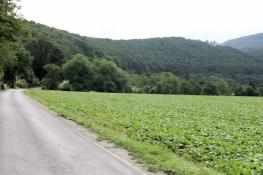Werra-Radweg vor Allendorf
