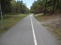 Dejlig cykelsti igennem kystskoven/Lovely tarmac bike path through the coastal forest