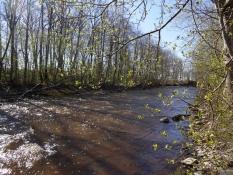 Vihterpalu-floden, hvor jeg vaskede mig/Vihterpalu river, where I had a bath