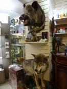 I denne jagt- og campingbutik købte jeg en gasdåse/At this hunterʹs store I bought a gas canister