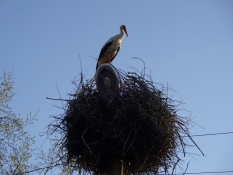 Storkerede i landsbyen Viru-Nigula/Storkʹs nest in the village of Viru-Nigula