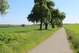 Ilmtal-Radweg bei Oberroßla