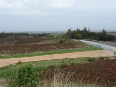 Trehøje plantage mod øst
