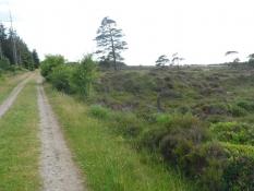 Linnet skov med en hede