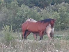Hestefold i Sofiedal