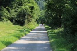 Am Donauradweg - tolle Oberfläche, kein Verkehr