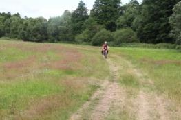 Moldau-Radweg führt durch eine Wiese