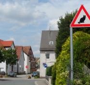 De passer godt på misserne i Schwand/Cats are cared for well at Schwand