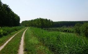 Radweg auf Damm bei San Martino