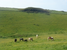 De grønne, grønne engelske enge/The green, green grass of the English meadows