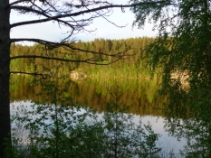 Store skove og mange søer=Finsk natur. Her i sol!/Woods and many lakes=Finnish nature. Here sunny!