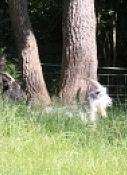 Die Ziegen genießen den sonnigen Tag