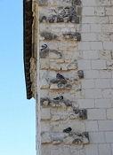 Mitbewohner auf Château de Montsoreau