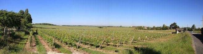 Weinfelder bei Saumur
