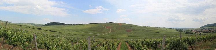 Weinlandschaft zwischen Orschwihr und Westhalten