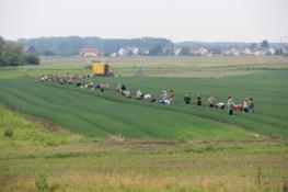 Erntearbeiter bei Speyer