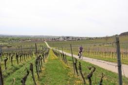 Weinberge zwischen Schweigen-Rechtenbach und Oberotterbach