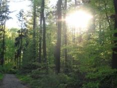 Træerne i Kollund skov er sprunget ud/The woods are green again