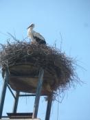 En storkerede i Askfelt/A storkʹs nest at Ascheffel