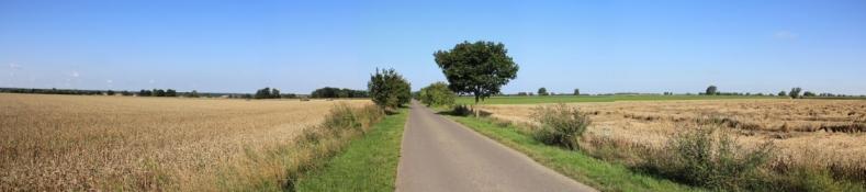 Elberadweg bei Mockritz