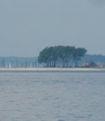 Markant trægruppe ved Sliens indsejling/Marked group of trees at the access gate to the Schlei