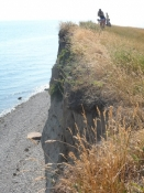 Digesvaler bygger rede i klinten/The cliff is the home of the sand martin