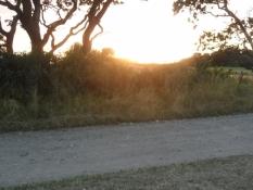 mens solen går ned/in the sunset