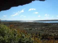 Der var mange gæs på strandengen/I saw many geese on the wet meadows