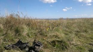 Freden hersker herude i græsset/Peace reigns out here on the grassland